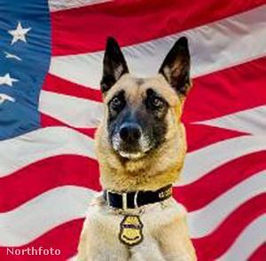 Bico, a hős kutya, aki kiszúrta a gyanús csomagot.