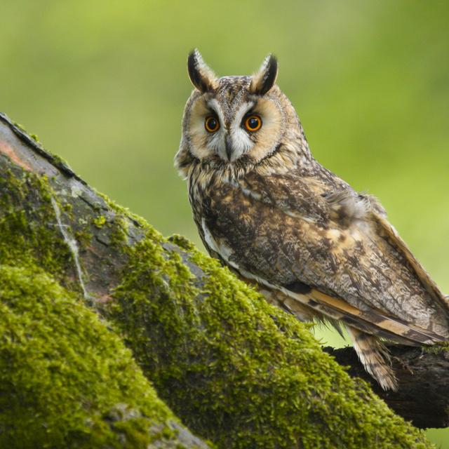 Olyan helyeken is megjelent az értékes madárfaj Magyarországon, ahol eddig nem találkoztak vele