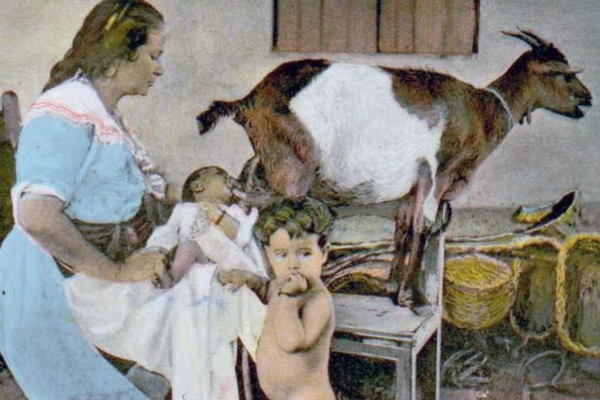 A fejőskecske mint szoptatódajka a középkorban: hogyan táplálták a csecsemőket, amikor még nem voltak tápszerek?