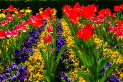virágkert magyar
