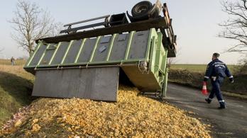 Felborult a kamion, hat tonna hús landolt az úton