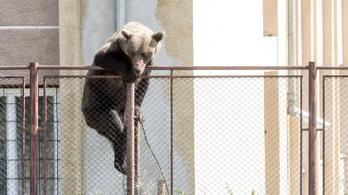 Súlyos a helyzet, a romániai medvékről volt szó az Európai Parlamentben