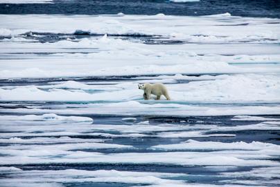 északi-sark-állatok1