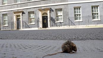 Jönnek a vérpatkányok, mennyországgá tették Londont a lezárások