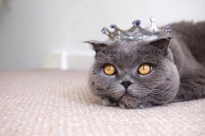 elkényeztet macska
