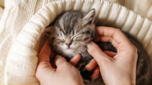 Ezért alszik olyan megmagyarázhatatlanul sokat a macskád