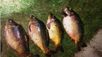 Fél mázsa halat lopott volna el a Hortobágyi-halastóból egy orvhalász