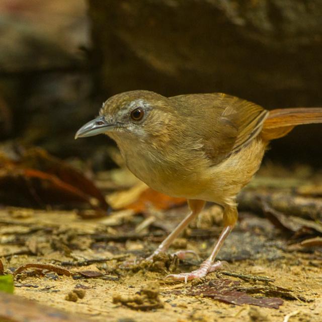 Elképesztően ritka állat bukkant fel: Napóleon idejében láttak utoljára ilyen madarat