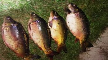 Több mint fél mázsa hallal bukott le a hortobágyi orvhalász