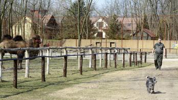 Zsebpénzükkel segítik a gyerekek a felsőlajosi állatkertet