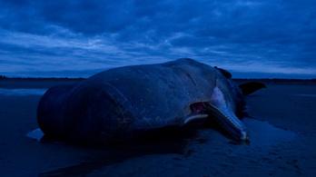 Óriási, elpusztult ámbráscetre bukkantak a kínai tengerparton