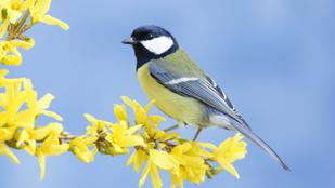 Itt a tavasz, fészkelnek a cinegék: mihez kezdjünk a postaládánkba költöző madarakkal?