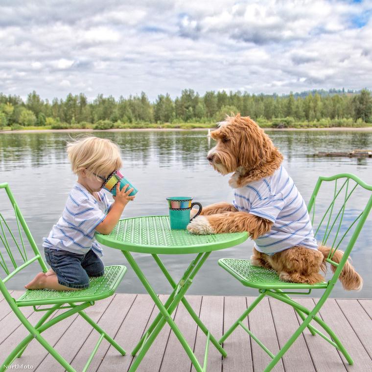 Reagen egy Labradoodle fajtájú kutya, ami, ha nem tudná, az uszkár és a labrador keresztezéséből született