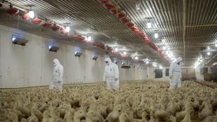Már nincs madárinfluenza miatti védőkörzet Magyarországon