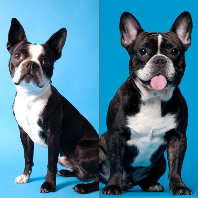 Kvíz: felismered, milyen kutya van a képen? Nem mindig egyszerű eldönteni