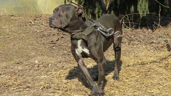 Huszonnégy kutyát mentettek ki a tiltott állatviadal szervezőitől
