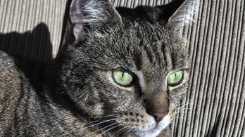Egy cica miatt nem indult a londoni gyorsvasút