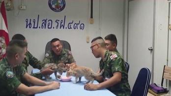 Égő hajóról mentették ki a cicákat a haditengerészek