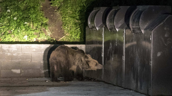Megjelentek a hazai erdőkben a farkasok és medvék