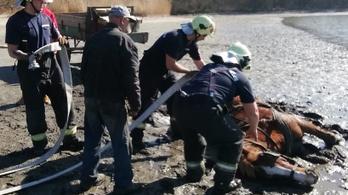 Belehajtott a tatai tóba egy lovas kocsi