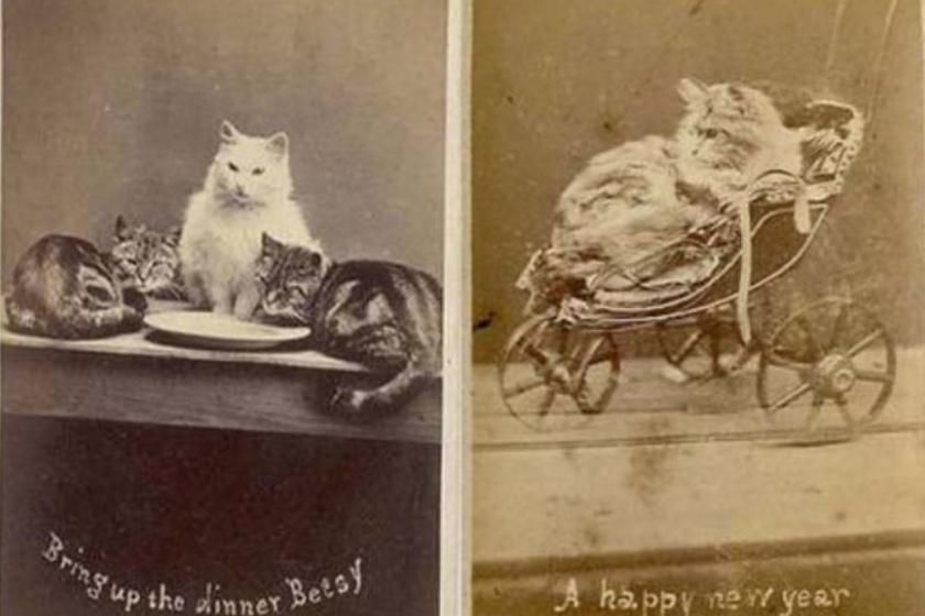 Az emberek már azelőtt is imádták az aranyos és vicces macskás képeket, hogy az internet megjelent volna.