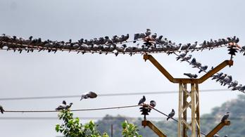 Hazai fejlesztés védi a madarakat az áramvezetékektől