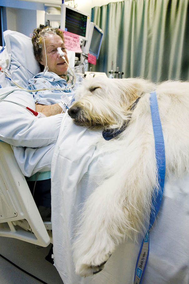 Az első állatot 2015 szeptemberében tudták bevinni a kórházba.