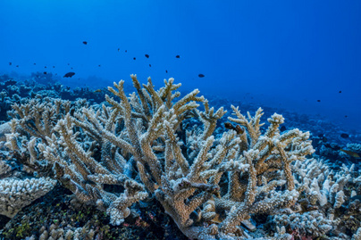 korallok pusztulása