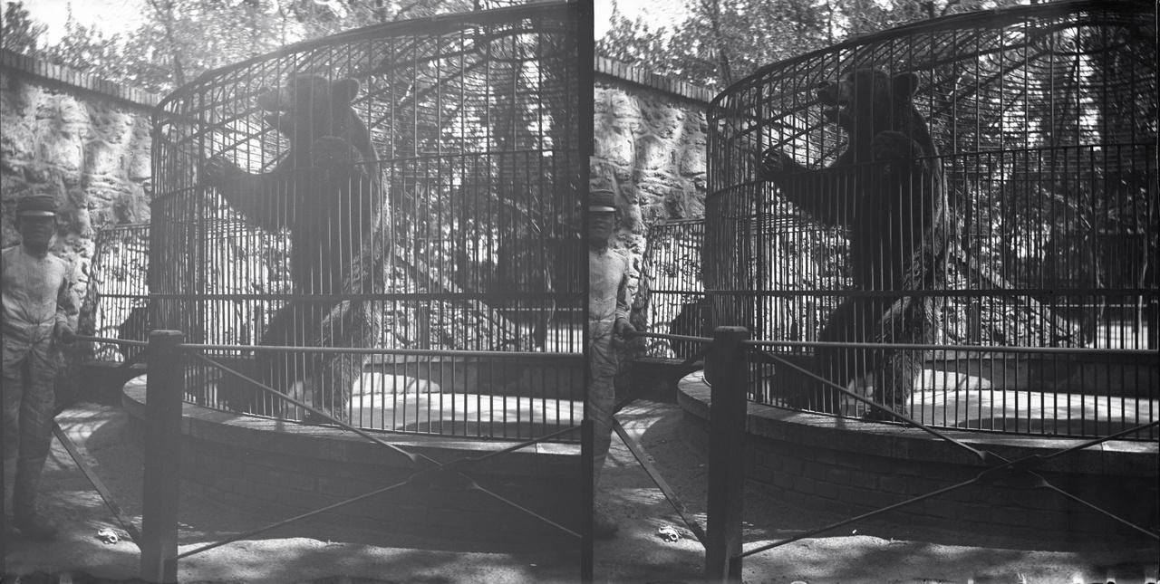 Fővárosi Állatkert – barna medve