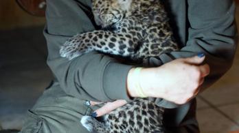 Gyermekek is segítettek megmenteni a Gyöngyösi Állatkertet