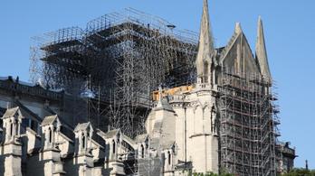 Megvan az első nyolc fa a Notre-Dame felújításához