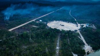 Elpusztult az esőerdők kétharmada
