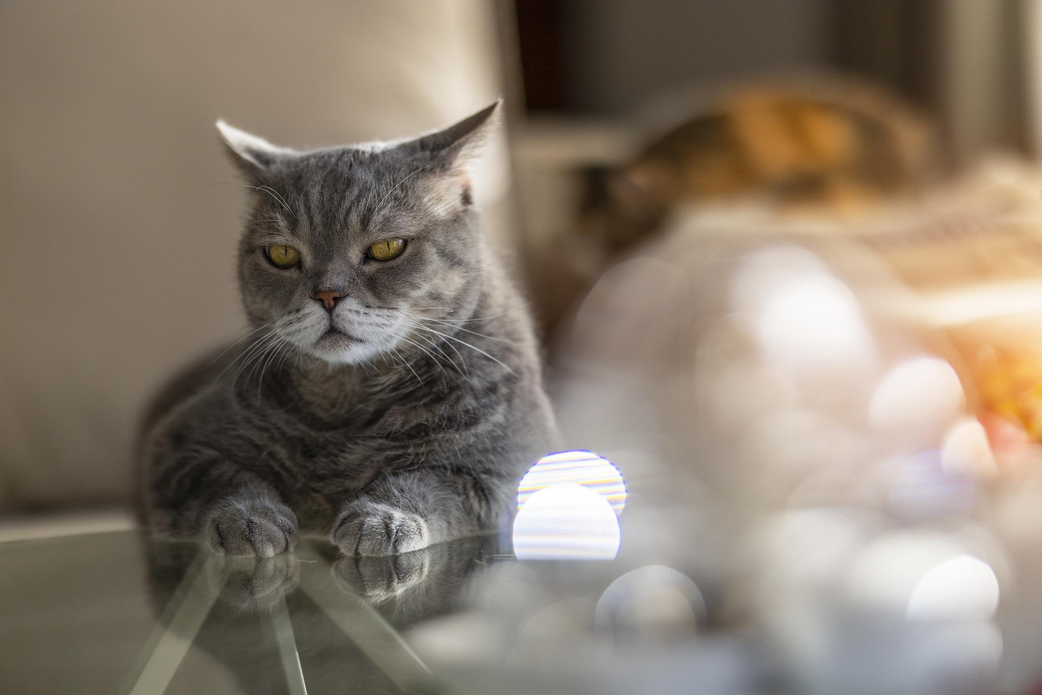 Mit üzen, ha a macska teljesen hátracsapja a fülét?