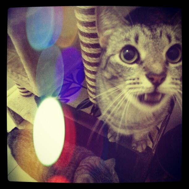 Egy tipikus instagramos macskafotó