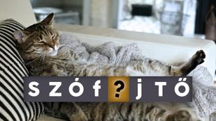 Miért pont macskajajnak hívjuk a másnaposságot?