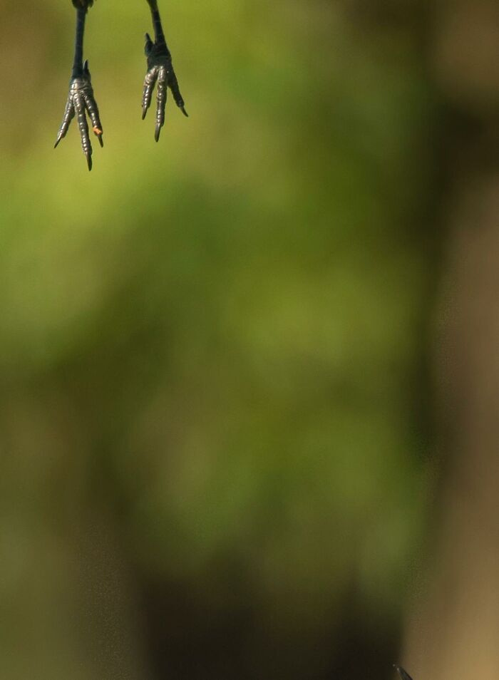 Ez történik, ha a madár nincs fotózkodós kedvében, és gyorsan továbbáll.