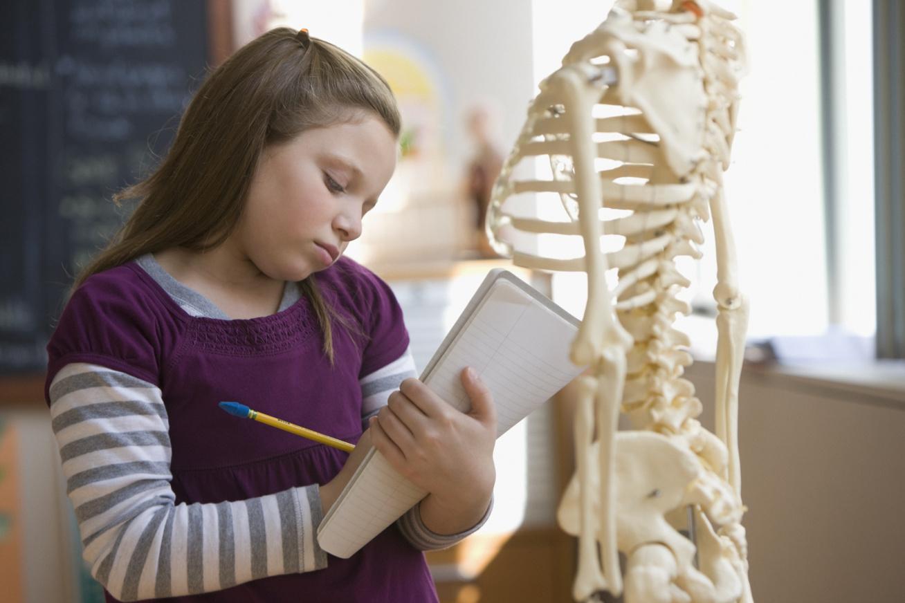 anatómia kvíz