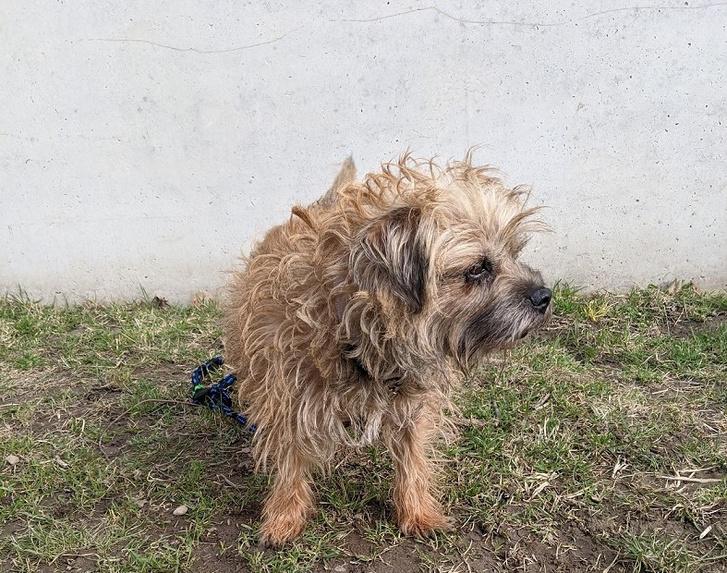 A megmentett gazda terrier kutyusa