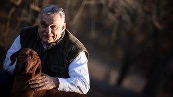 Megalakult a Nemzeti Állatvédelmi Tanács