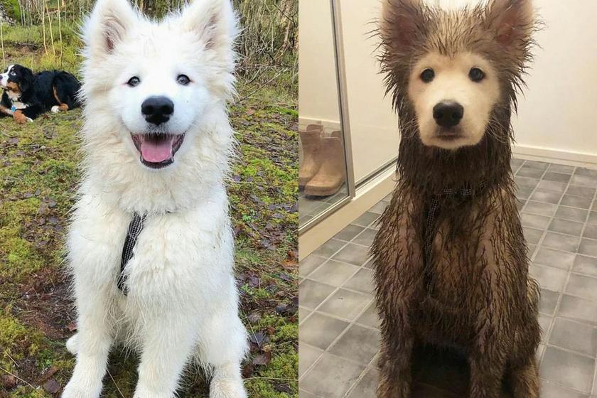Játék előtt és után.