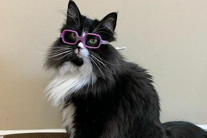 szemüveges-macska-borító
