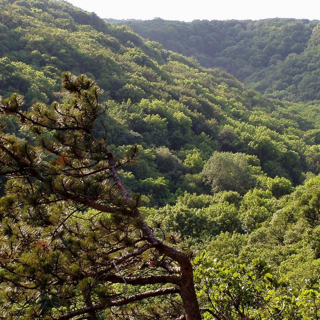 8 csodálatos, érintetlen völgy Magyarországon: álomszép vidékeken vezet végig az út
