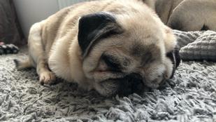 Tüneményes alvó állatokkal ünnepeljük az alvás világnapját: nézd meg a kedvenceinket!