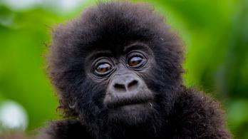 Gorillamentőket támogatnak a reddites tőzsdézők