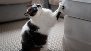 Így akadályozd meg, hogy a macskád szétszedje a lakást