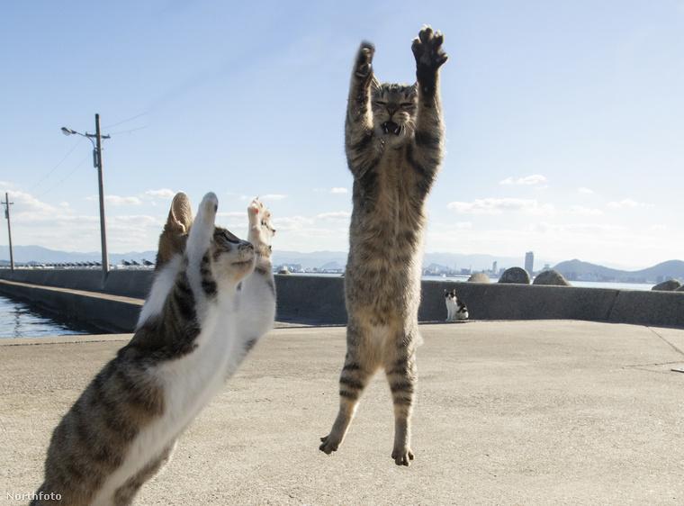 Már az elején szeretnénk felhívni a figyelmet arra, hogy a háttérben szinte mindig lesz egy olyan macska, amely enyhe megvetéssel nézi a bulizó társait.