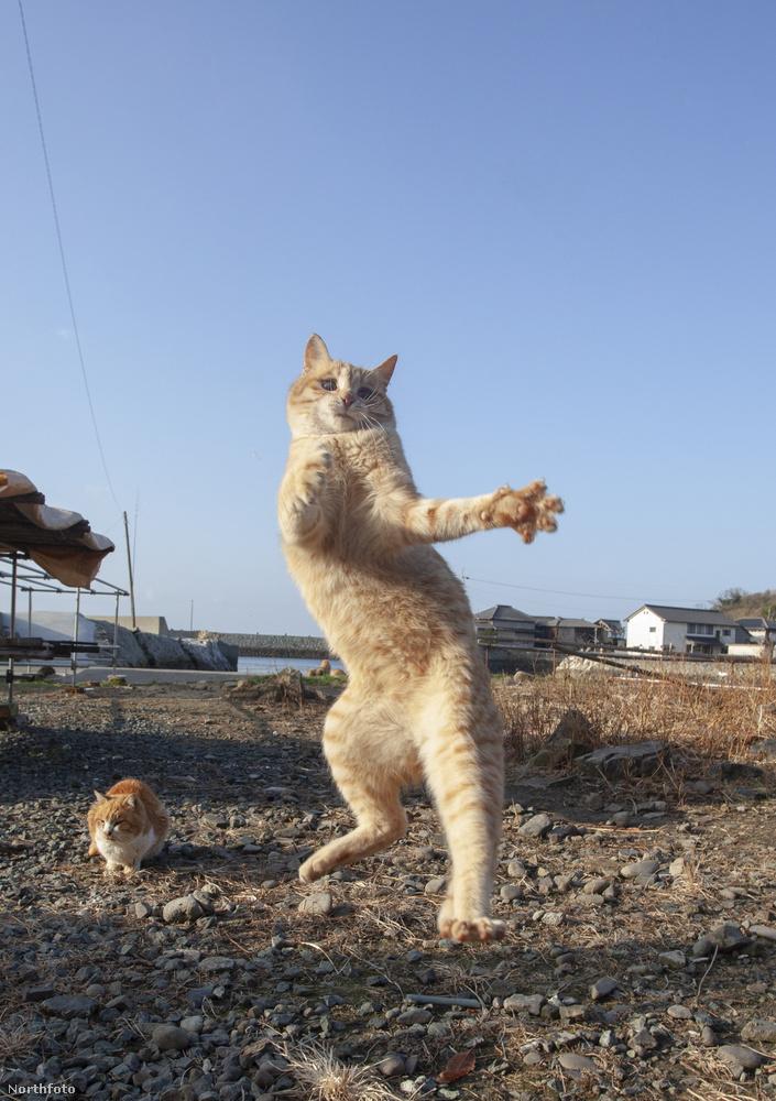 Megejtően sokféle táncmozdulatra képesek ezek a lények.