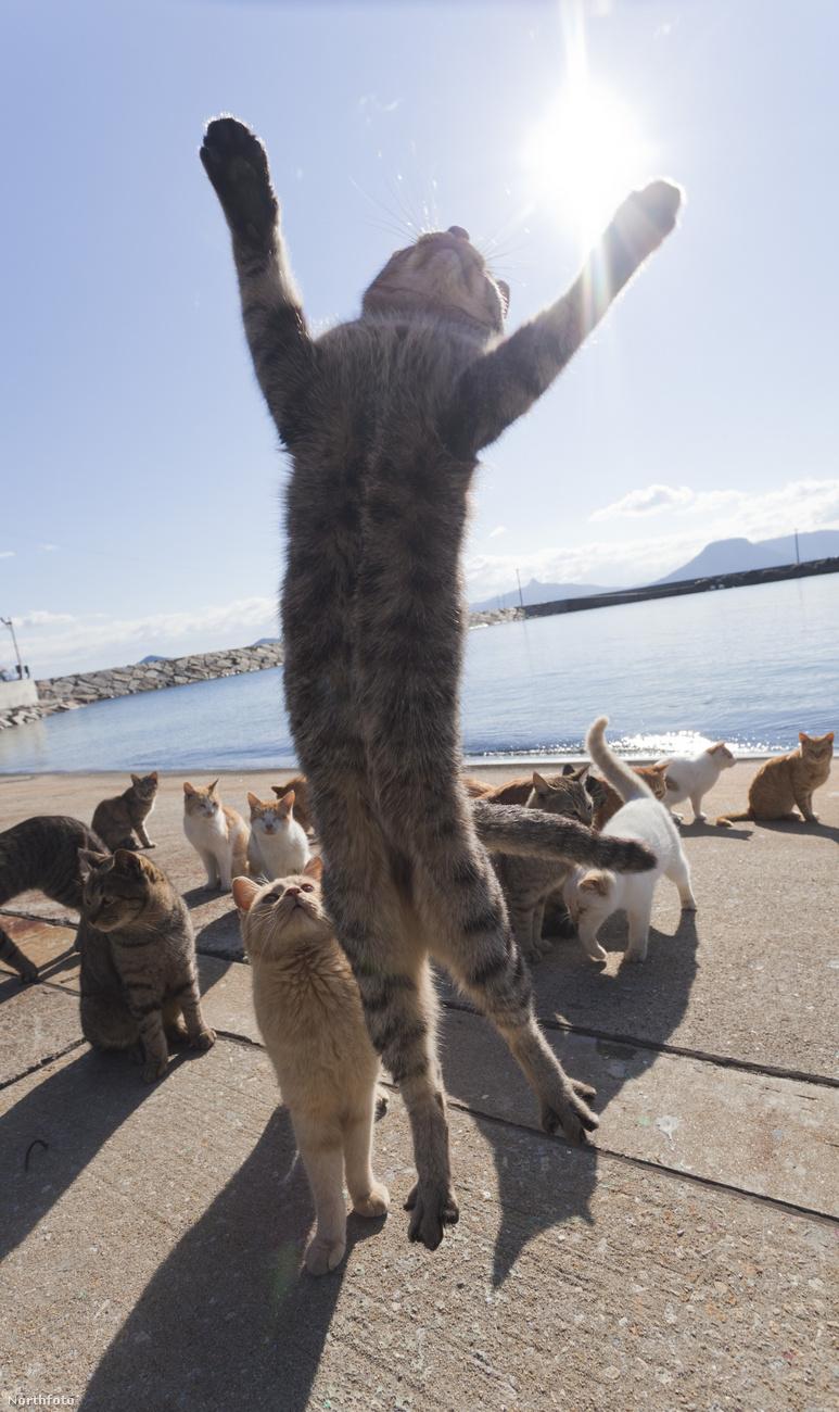 Pityuka, gyere le a csillárról, sok volt az a macskamenta!