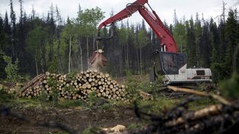 Éhségsztrájkkal tüntet egy kanadai férfi a fakivágások ellen