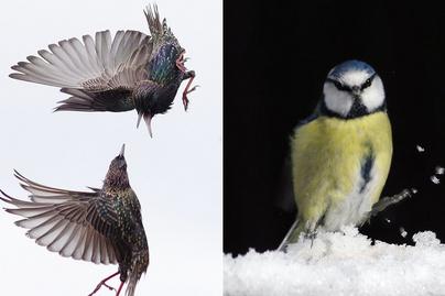 madarak-borító